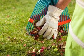 Why Hiring a Garden Clearance Company For Your Garden In Greenwich Is Vital